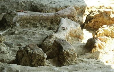 У Китаї знайшли сліди динозаврів віком понад 145 мільйонів років