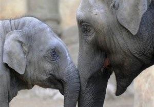 В Зимбабве браконьеры убили десять слонов