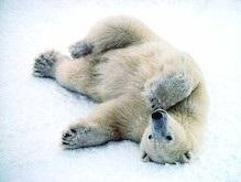 В России создали игру с целью спасти медведей