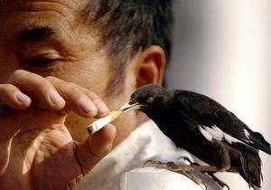 Городские птицы используют сигаретные окурки для защиты гнезд