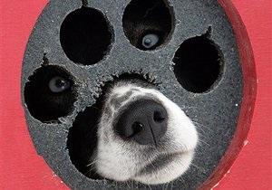 В Ужгороде защитники животных принесли к мэрии мертвых собак