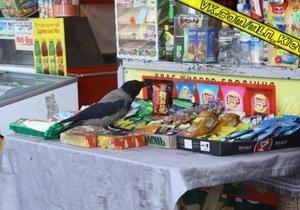В центре Киева ворона украла фисташки из кафе