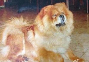 Житель Китая пообещал квартиру тому, кто найдет его собаку