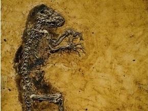 Недостающее звено в эволюции  оказалось лемуром, не имеющим отношения к человеку