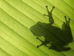 Ученые бьют тревогу: Под угрозой исчезновения оказались лягушки