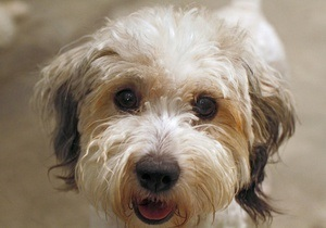 Священники не пустили пса на похороны хозяина