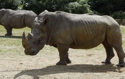 Впарижском зоопарке неизвестные убили носорога иотпилили унего рог