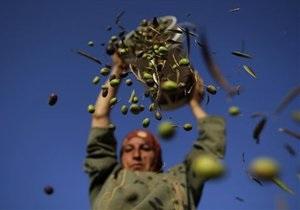 Новости медицины - как сбросить вес: Оливковое масло помогает контролировать аппетит