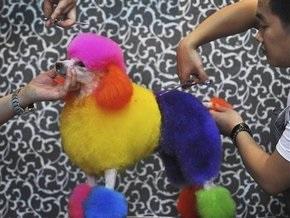 В Боливии использование животных в цирках признали актом жестокости