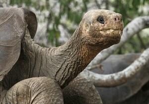 Фотогалерея: Вымерший вид. Скончалась последняя гигантская галапагосская черепаха