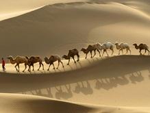 В Тунисе родился голубоглазый верблюжонок
