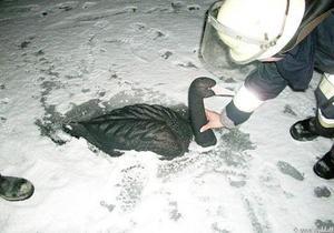 Немецких пожарных вызвали ради спасения пластикового лебедя