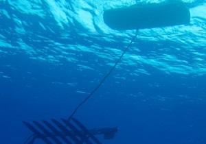 Роботы-пловцы установили мировой рекорд, преодолев расстояние в 6000 километров