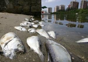 Из озера в Рио-де-Жанейро выловили более 60 тонн мертвой рыбы