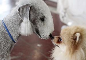 В интернете появился первый украинский сайт знакомств для животных