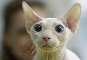 В России судебные приставы арестовали котенка