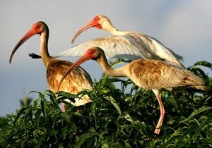 Ученые: Ртуть способствует развитию гомосексуальности у птиц
