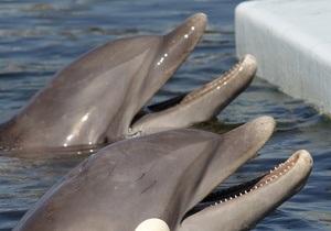 новости Крыма - санаторий Юность - Симеиз - Пострадавшей в санатории Юность девочке предложили отдохнуть в Ялте и пройти курс дельфинотерапии