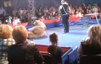 Нападение циркового медведя на наблюдателей: очевидец поведал подробности