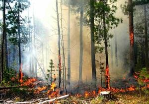 В Полтавской области задержали мужчину, который бегал с факелом и поджигал траву