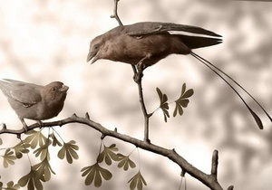 Палеонтологи сумели определить пол ископаемых птиц