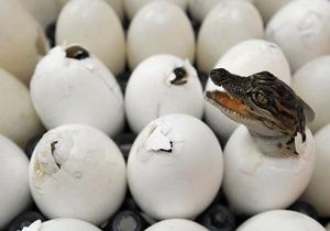 Австралийцы привыкают жить бок о бок с крокодилами