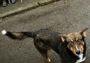 Жители дома, во дворе которого нашли тело оператора УТ-1, заявили, что собаки не могли напасть на человека