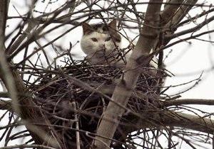 Жители Нивок просят столичных спасателей снять застрявшую на дереве кошку
