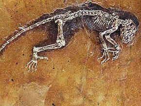 Недостающее звено в эволюции человека оценили в $750 тысяч