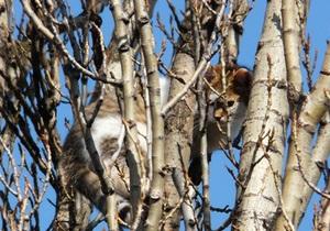 Столичные пожарные спасли кота, который четыре дня сидел на дереве