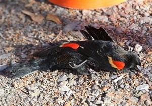 В Новый год произошел очередной случай массовой гибели птиц в США