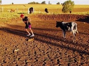 Из-за засухи в трех регионах России объявлен режим чрезвычайной ситуации