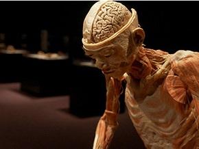 Во Франции запретили выставку трупов