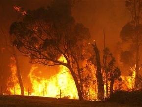 Более миллиона животных стали жертвами пожаров в Австралии
