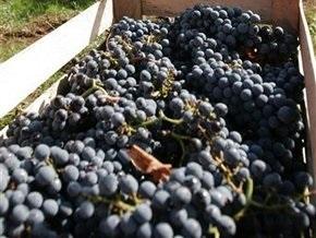 Киевские таможенники задержали 56 тонн винограда