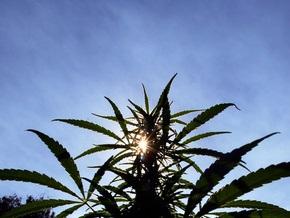Швейцария собирается легализовать употребление и выращивание марихуаны