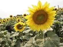 Греция конфисковала партию украинского растительного масла