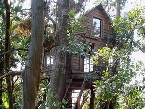 Пенсионер из Херсонской области уже несколько лет живет на деревьях