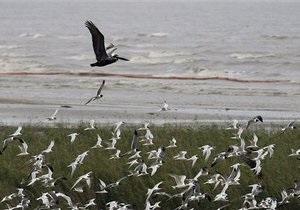 Нефтяное пятно в Мексиканском заливе может увеличиться в десять раз