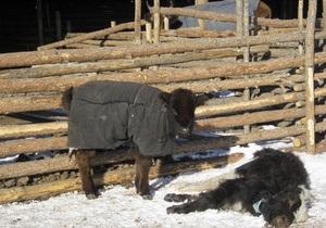Красный крест просит мир помочь Монголии, страдающей от аномальных холодов
