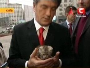 Ветеринары: Состояние здоровья котенка Ющенко удовлетворительное