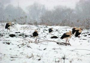 В Ивано-Франковской области спасатели согрели 40 аистов. Под Киевом птицы ждут помощи
