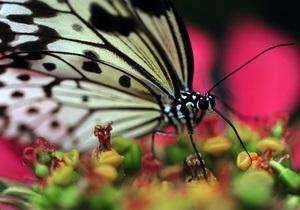 Новости Италии: В Риме открылся парк бабочек