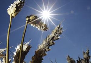 В США расследуют, как ГМО-пшеница появилась вне испытательных полей
