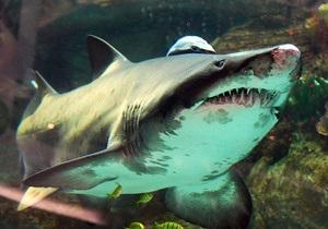 : Акула в столичном ТРЦ доживает последние дни