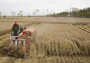 Присяжнюк: Украина может продлить квотирование экспорта зерна в 2011 году