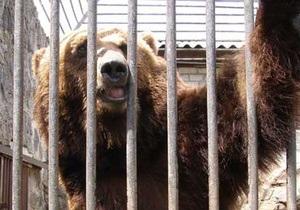 В Черкасском зоопарке родились трое медвежат
