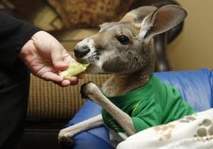 Фотогалерея: Вместе по жизни. Американка спасается от депрессии, заботясь о парализованном кенгуру