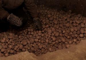 СМИ: Россия импортировала рекордное количество картофеля из Нидерландов и Египта