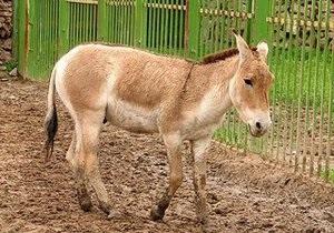 Аскания-Нова передаст российским зоопаркам диких животных